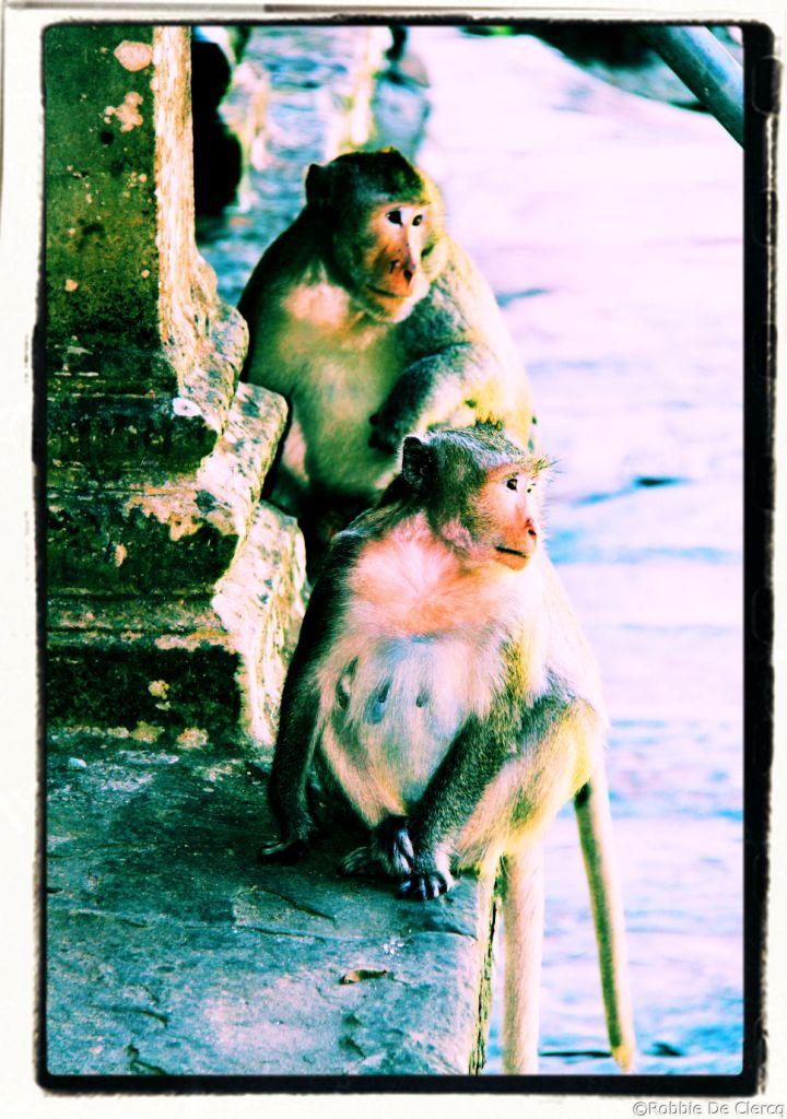 Angkor Wat (51)