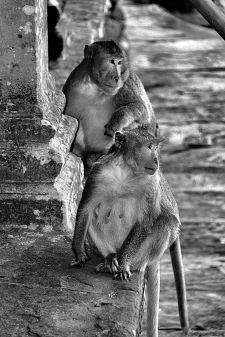 Angkor Wat (52)