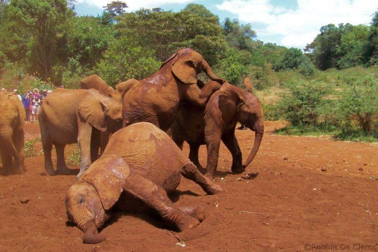 David Sheldrick Wildlife Project (16)