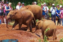 David Sheldrick Wildlife Project (23)
