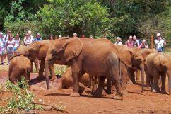 David Sheldrick Wildlife Project (28)