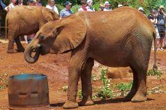 David Sheldrick Wildlife Project (29)