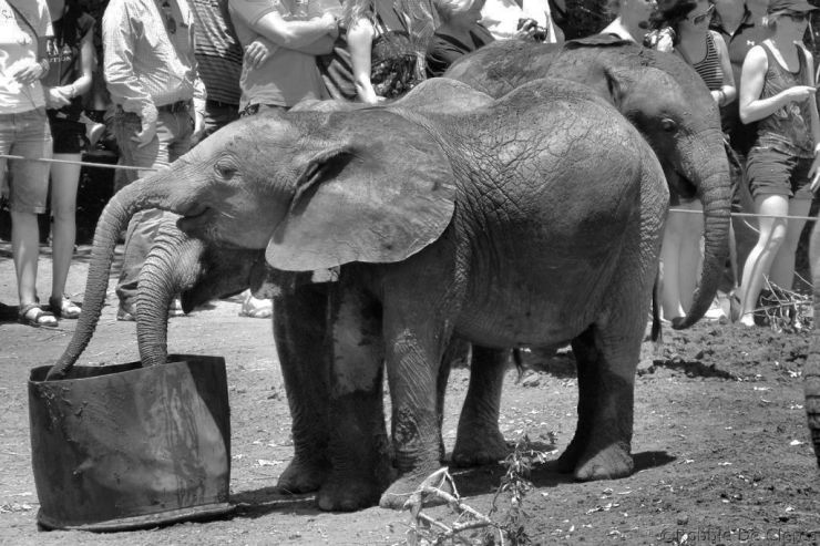 David Sheldrick Wildlife Project (33)