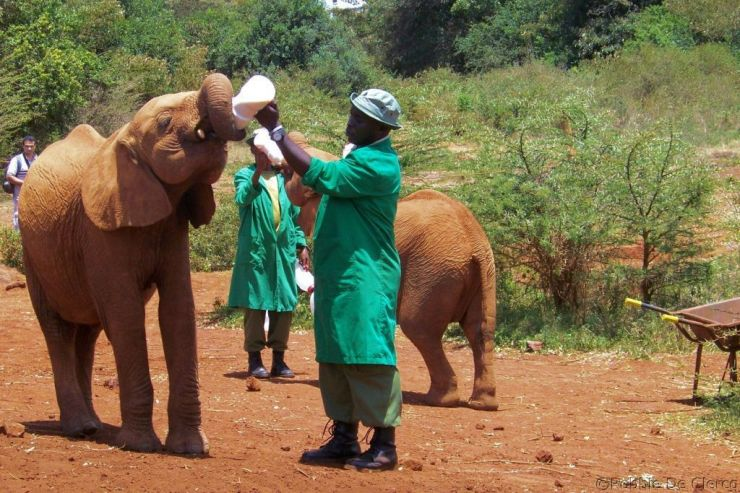 David Sheldrick Wildlife Project (34)