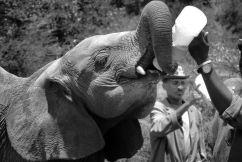 David Sheldrick Wildlife Project (36)