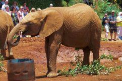 David Sheldrick Wildlife Project (38)