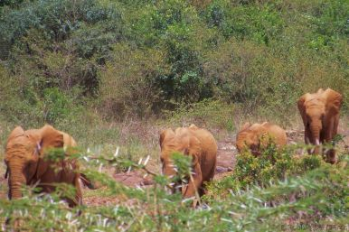 David Sheldrick Wildlife Project (39)