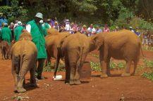 David Sheldrick Wildlife Project (4)