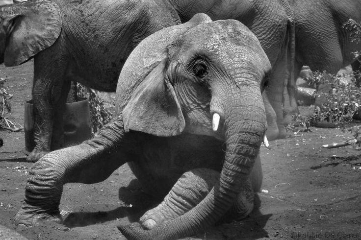 David Sheldrick Wildlife Project (47)