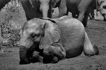 David Sheldrick Wildlife Project (9)