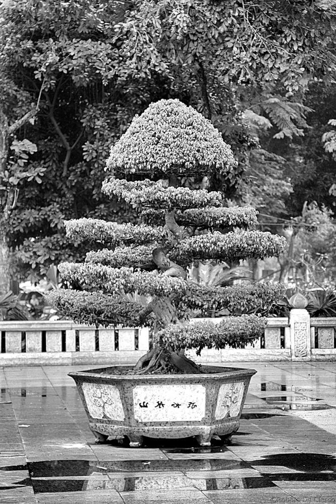 Hanoi Divers (10)