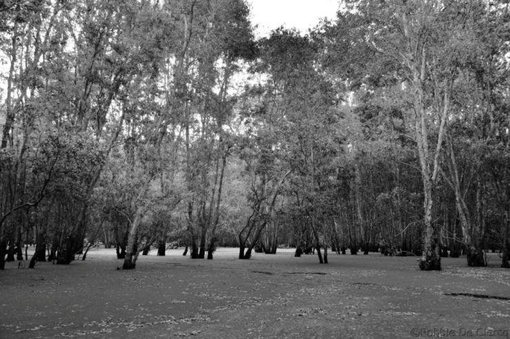 Mangrove (15)