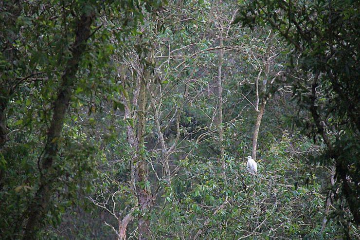 Mangrove (16)