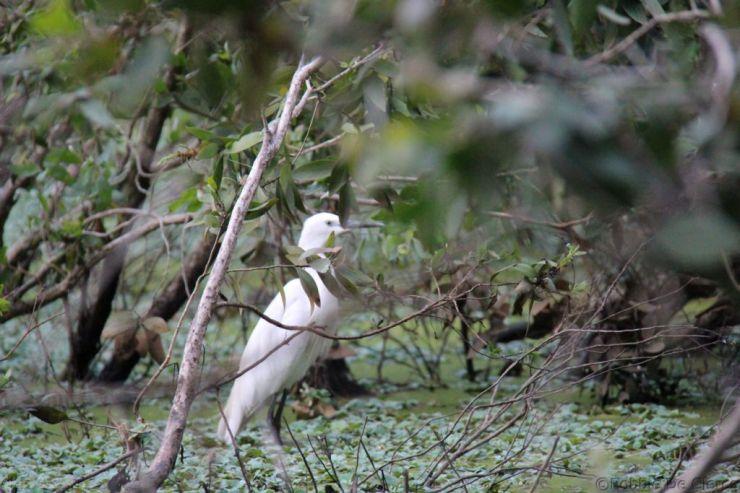 Mangrove (19)