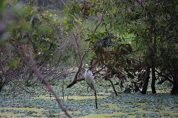 Mangrove (20)