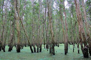 Mangrove (21)