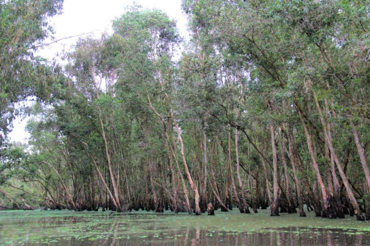 Mangrove (23)
