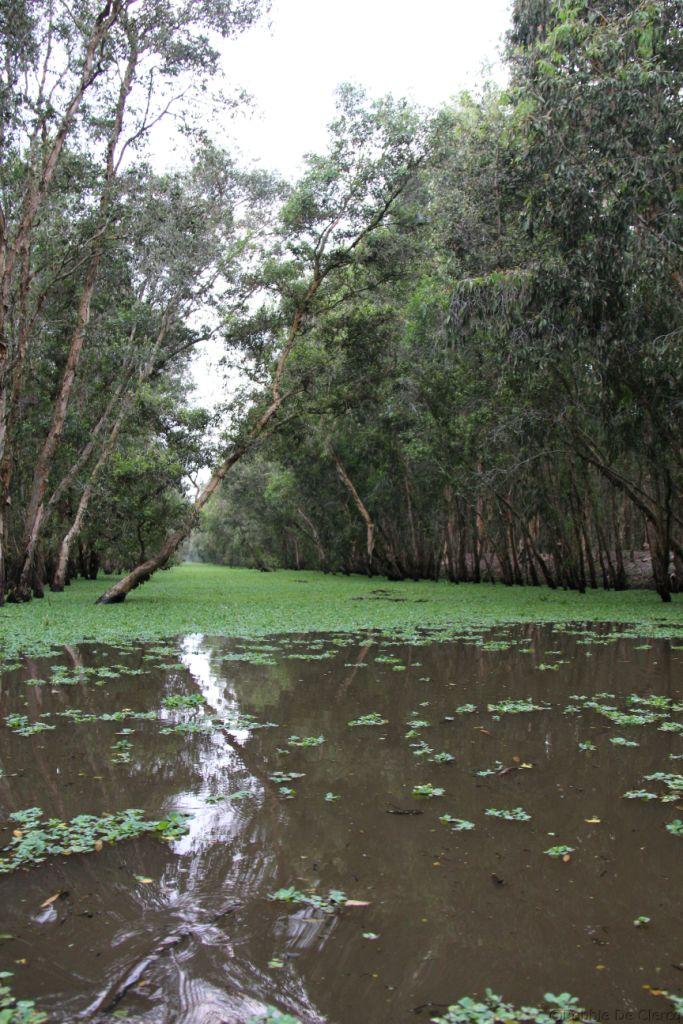 Mangrove (24)