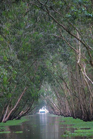 Mangrove (25)