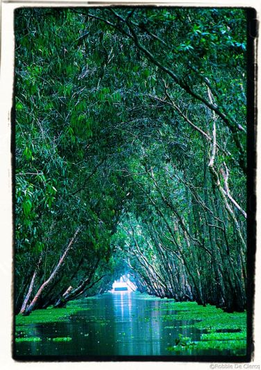 Mangrove (26)