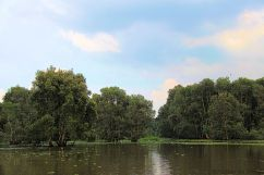 Mangrove (3)