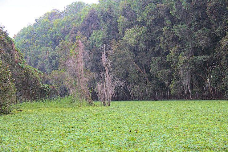 Mangrove (31)