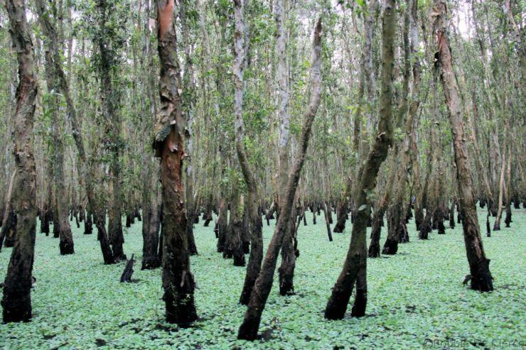 Mangrove (7)