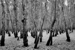 Mangrove (8)