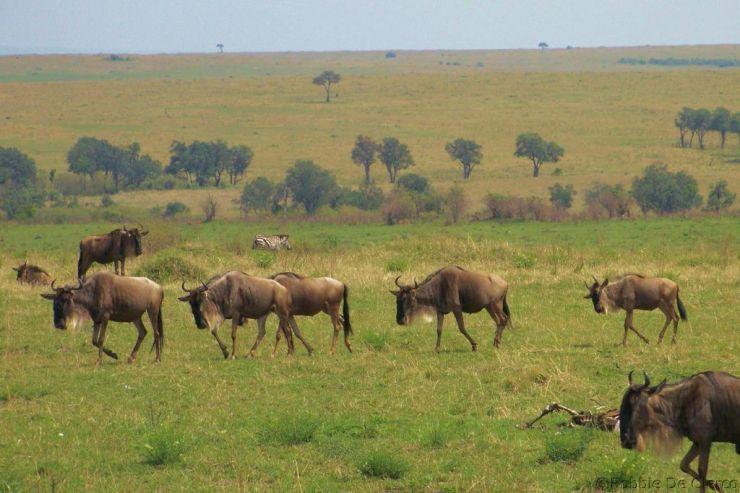 Masai Mara National Reserve (100)