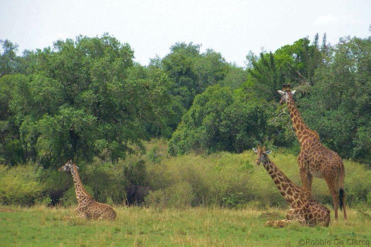 Masai Mara National Reserve (103)