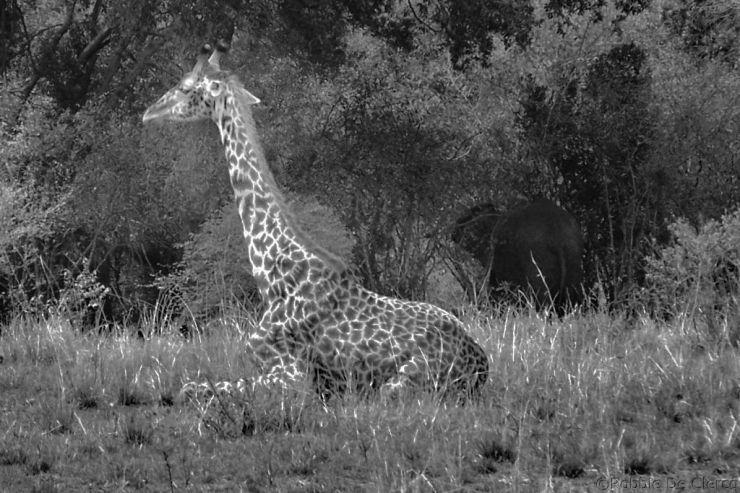 Masai Mara National Reserve (104)