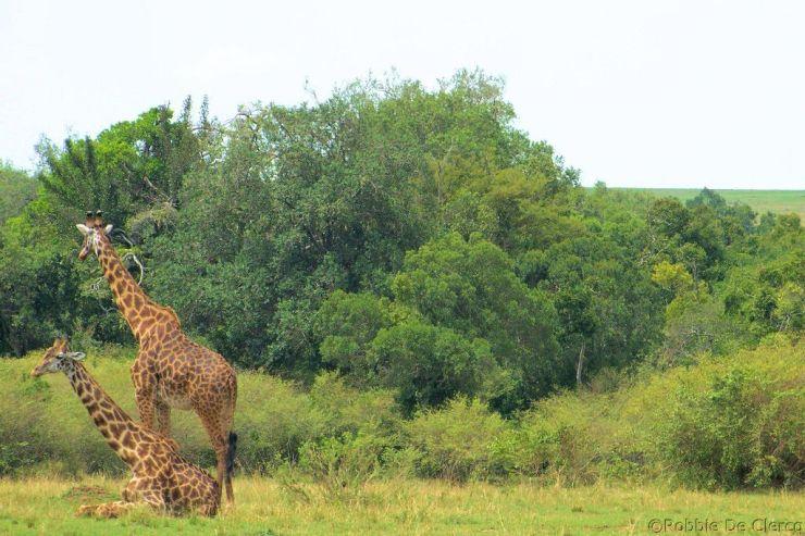 Masai Mara National Reserve (105)