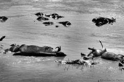 Masai Mara National Reserve (113)
