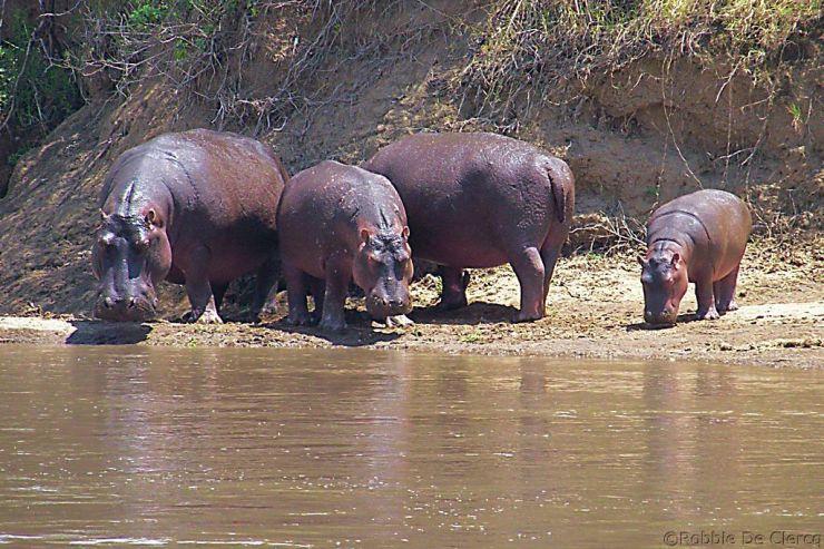 Masai Mara National Reserve (114)
