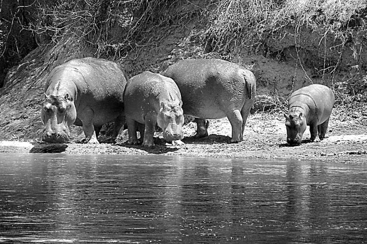 Masai Mara National Reserve (115)