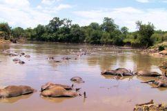 Masai Mara National Reserve (116)