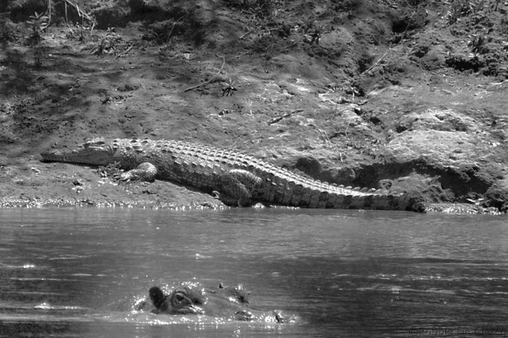 Masai Mara National Reserve (119)