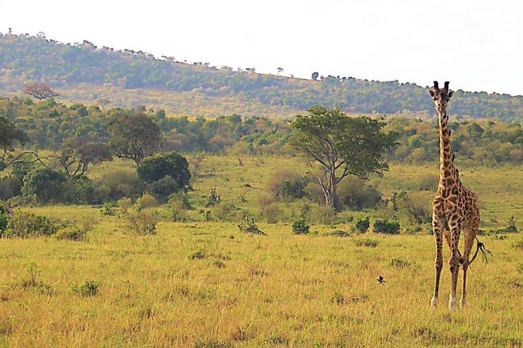Masai Mara National Reserve (12)