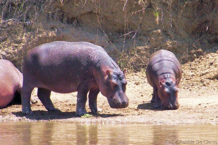 Masai Mara National Reserve (120)