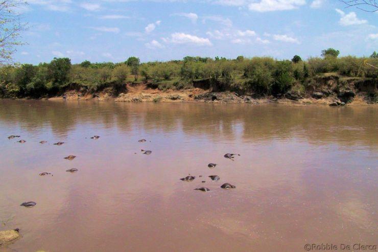 Masai Mara National Reserve (121)