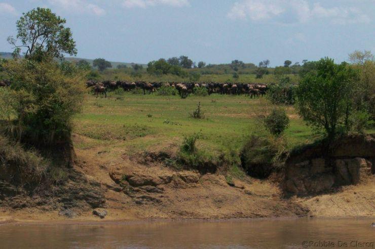 Masai Mara National Reserve (123)