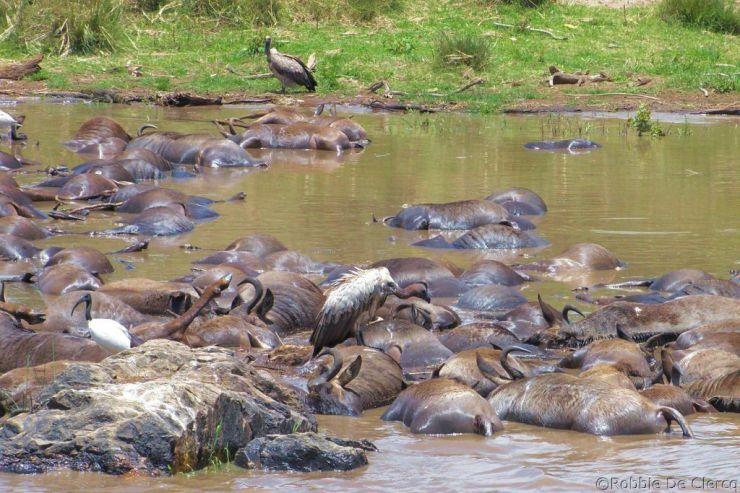 Masai Mara National Reserve (125)
