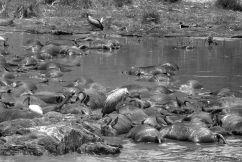 Masai Mara National Reserve (126)