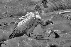 Masai Mara National Reserve (128)