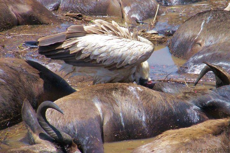 Masai Mara National Reserve (129)