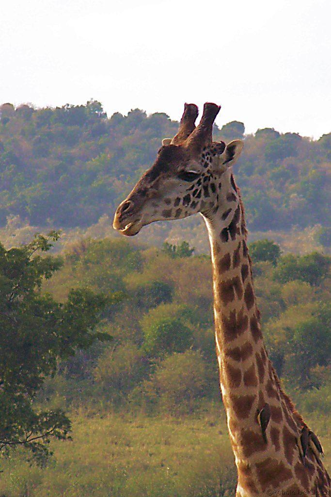 Masai Mara National Reserve (13)