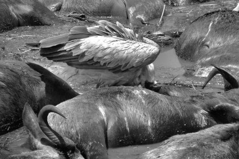 Masai Mara National Reserve (130)