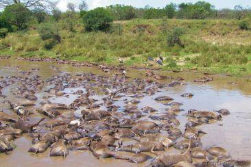 Masai Mara National Reserve (131)