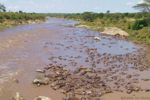Masai Mara National Reserve (138)
