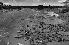 Masai Mara National Reserve (139)